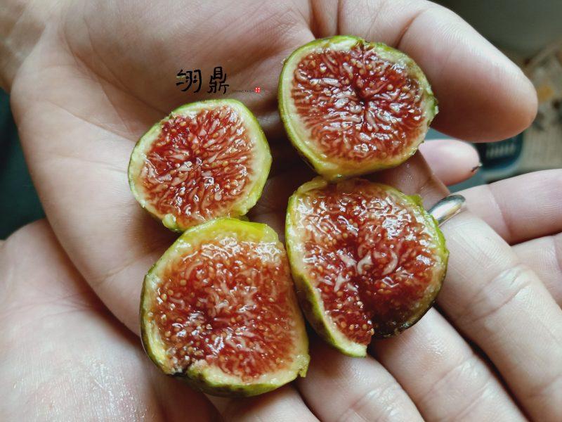 草莓維爾特
